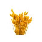 Трава сухоцвет, фаларис, жёлтый 100 г