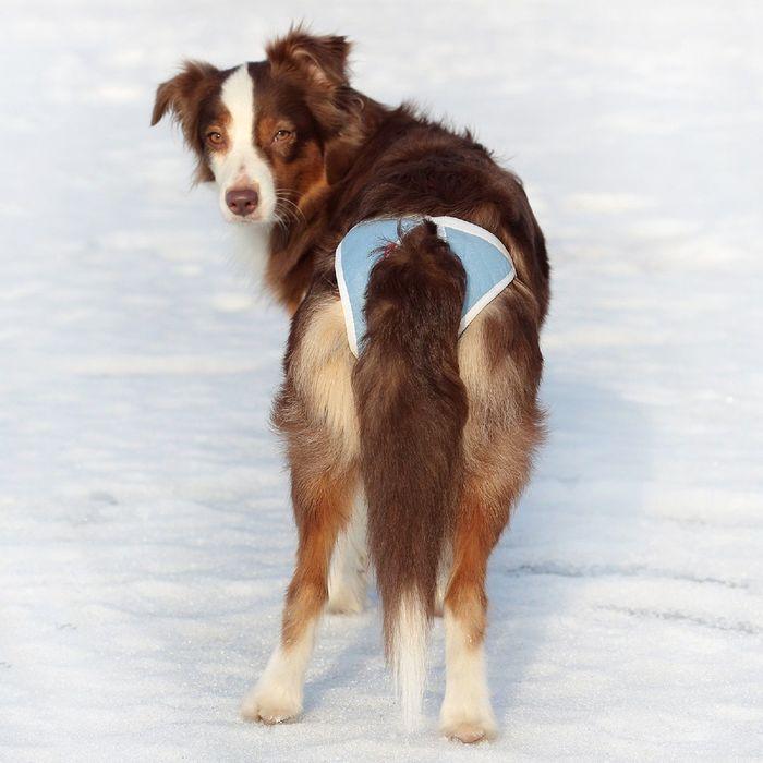 Трусы для собак многоразовые OSSO ABSORB, размер XXS