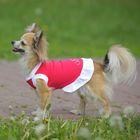 Платье OSSO для собак «Красотка», размер 25, микс цветов