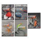 """Тетрадь 48 листов клетка """"Color splash: цветные объекты на черно-белом"""", обложка мелованный картон, выборочный УФ-лак, МИКС"""