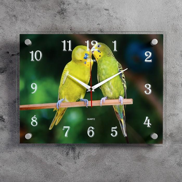 """Часы настенные, серия: Животный мир, """"Попугайчики"""", 30х40 см"""
