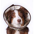 Ветеринарный елизаветинский воротник OSSO, XS (обхват шеи 26-32 см)