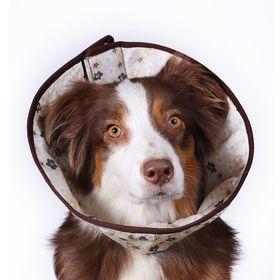 Ветеринарный елизаветинский воротник OSSO, S (обхват шеи 32-40 см) Ош