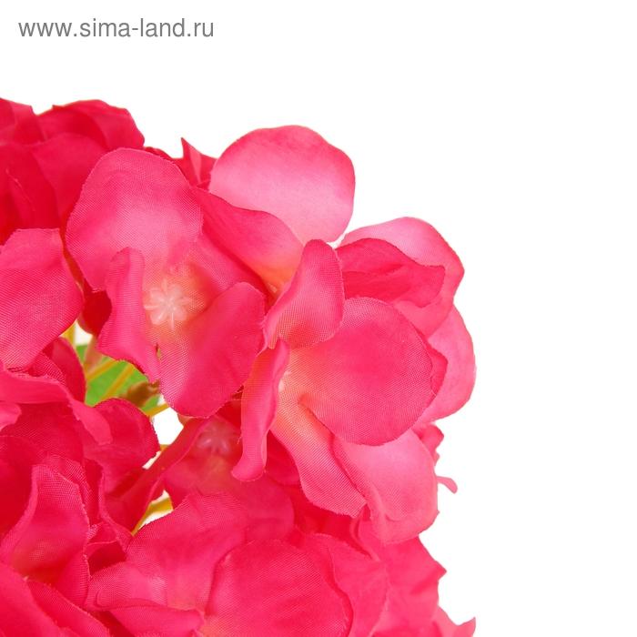 Букет фиалок стоимость, цветы на заказ сочи