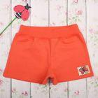 Шорты для девочки, рост 74-80 см, цвет персиковый 308М-464_М