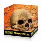 Декор череп примата для террариума