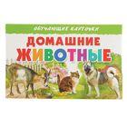 Обучающие карточки «Домашние животные»