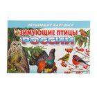 Обучающие карточки. Зимующие птицы России