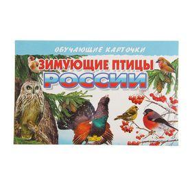 Обучающие карточки «Зимующие птицы России», 16 карточек