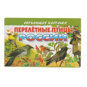 Обучающие карточки «Перелётные птицы России», 16 карточек