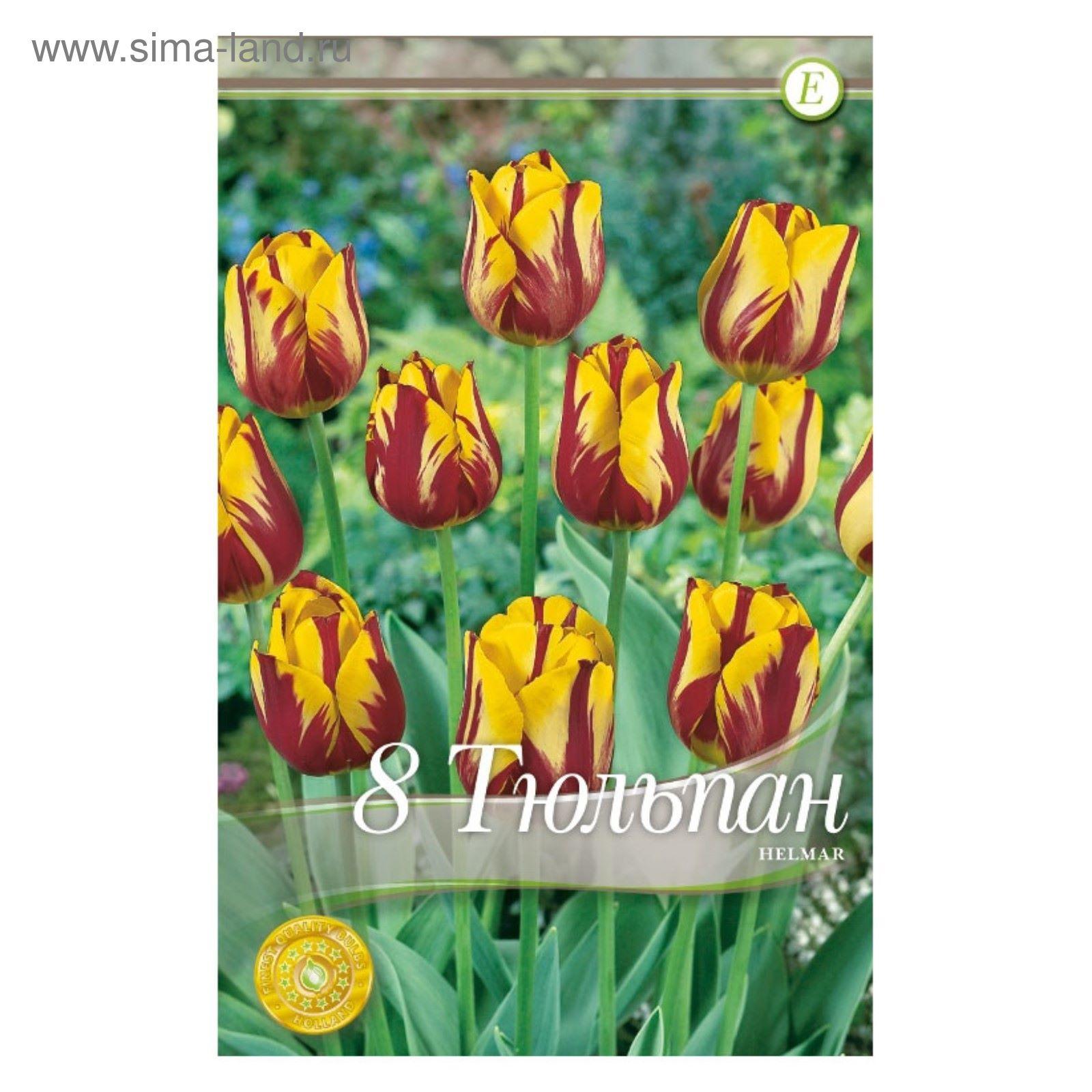 1e1672b88 Мини-витрина Тюльпаны Простые Поздние Хелмар 200 шт (2491864 ...