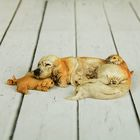 Жучка со щенками