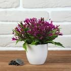 Бонсай 17*17 см с мелкими цветочками микс