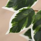 """Дерево искусственное """"Фикус Фолиа"""" 150 см - фото 939961"""
