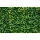 Фотосетка, 300 × 158 см, с фотопечатью, «Зелёная стена»