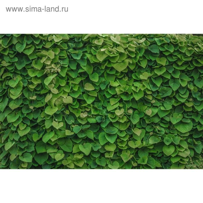 Фотосетка «Зелёная стена», 300 х 158 см, с фотопечатью
