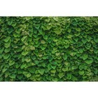 Фотосетка «Зелёная стена», 250 х 158 см, с фотопечатью
