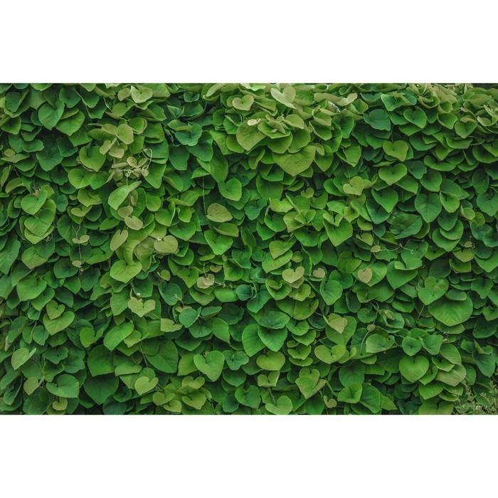 Фотосетка, 250 × 158 см, с фотопечатью, «Зелёная стена»