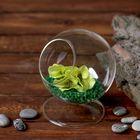 Флорариум «Шар» - фото 1705008