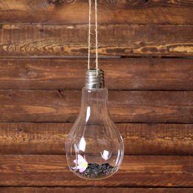 Флорариум «Лампочка» - фото 1705012