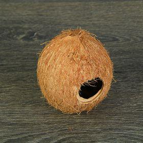 Скорлупа кокосовая целая для рептилий и грызунов, L Ош