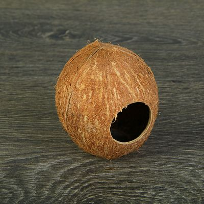 Скорлупа кокосовая целая для рептилий и грызунов, M