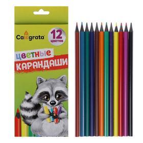 Pencils 12 colors Calligrata