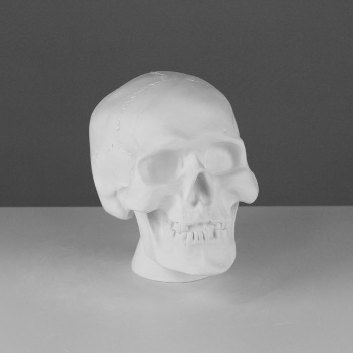 Гипсовая фигура Череп анатомический 20*13*16 см 10-101