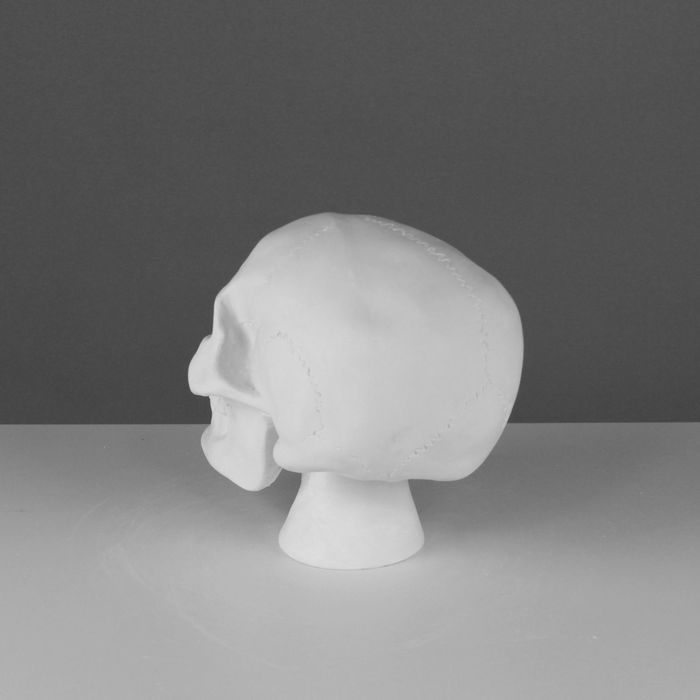Гипсовая фигура, Череп анатомический, 20х13х16 см