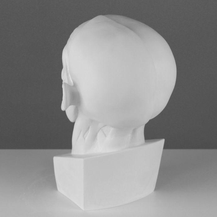 Гипсовая фигура, голова Мюнхенская (анатомическая), 24 х 20 х 33 см