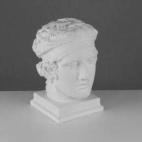 Гипсовая фигура, Голова Диадумена «Мастерская Экорше», 20х20х33 см