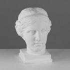 Гипсовая фигура, голова Венеры Милосской «Мастерская Экорше», 22 х 32 х 35 см