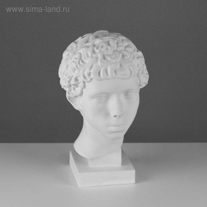 Гипсовая фигура Голова Мальчик ливиец 20*22*34 см 10-131