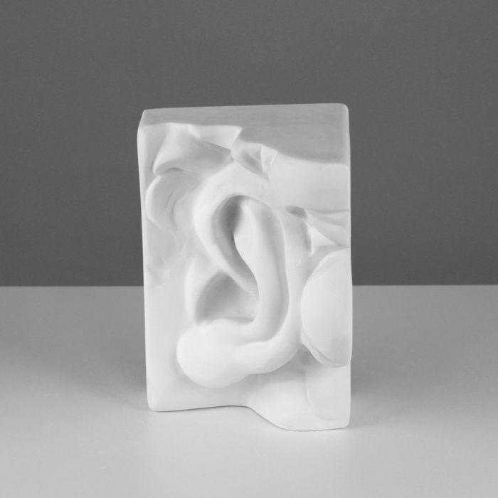 Гипсовая фигура, ухо Давида левое «Мастерская Экорше», 16 х 14 х 24,5 см