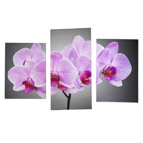 """Модульная картина на подрамнике """"Нежная орхидея"""", 33×25, 33×50, 33×65 см, 99×65 см"""
