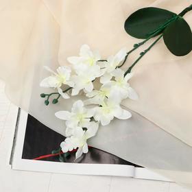 "Artificial flowers ""Orchid Phalaenopsis multiflora"" white"