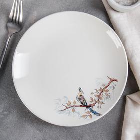 Тарелка «Птицы», d=19 см, МИКС