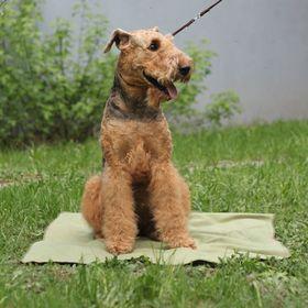 Охлаждающий коврик для собак OSSO, 75 х 100 см