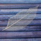 Сухой лист магнолии, (набор 10 шт), цвет натуральный