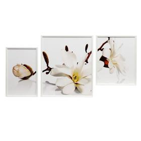 """Модульная картина в раме """"Белые цветы магнолии"""""""