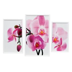 """Картина модульная в раме """"Орхидея"""" 50*70 см (20*40,30*50,20*35)"""