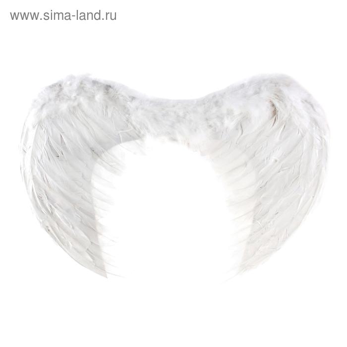 Angel wings, white