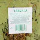 Веник для бани ЭКСТРА из кавказского дуба с таволгой - фото 1399686