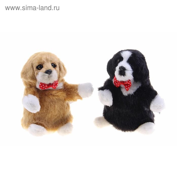 """Мягкая интерактивная игрушка-повторюшка """"Собачка"""", цвета МИКС"""