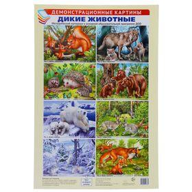 """Демонстрационные картины """"Дикие животные"""" 8 плакатов, А3+"""