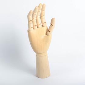 Модель деревянная художественная Манекен «Рука мужская правая» 31 см
