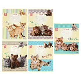Тетрадь 12 листов косая линейка 'Забавные котята', обложка картон хромэрзац, белизна блока 75% Ош