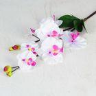 """Цветы искусственные """"Орхидея феленопсис"""" 12*75 см, бело-сиреневая"""