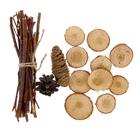 Набор Осиновая роща (Связка осиновых прутиков, 10 спилов дерева 3-5 см, 2 шишки)