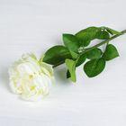 """Цветы искусственные """"Роза бархатная"""" 11*65 см, белая"""